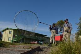heading down to dip net coho salmon