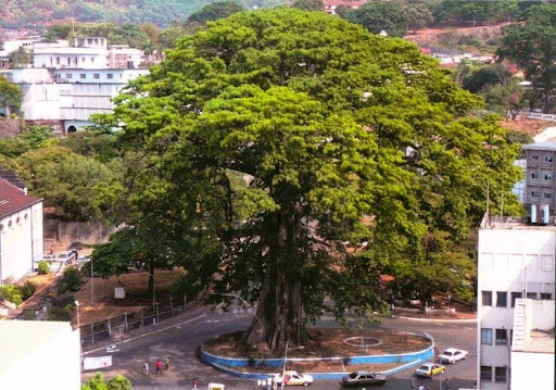 cotton-tree-freetown-2
