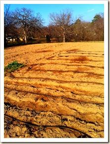 garden rows