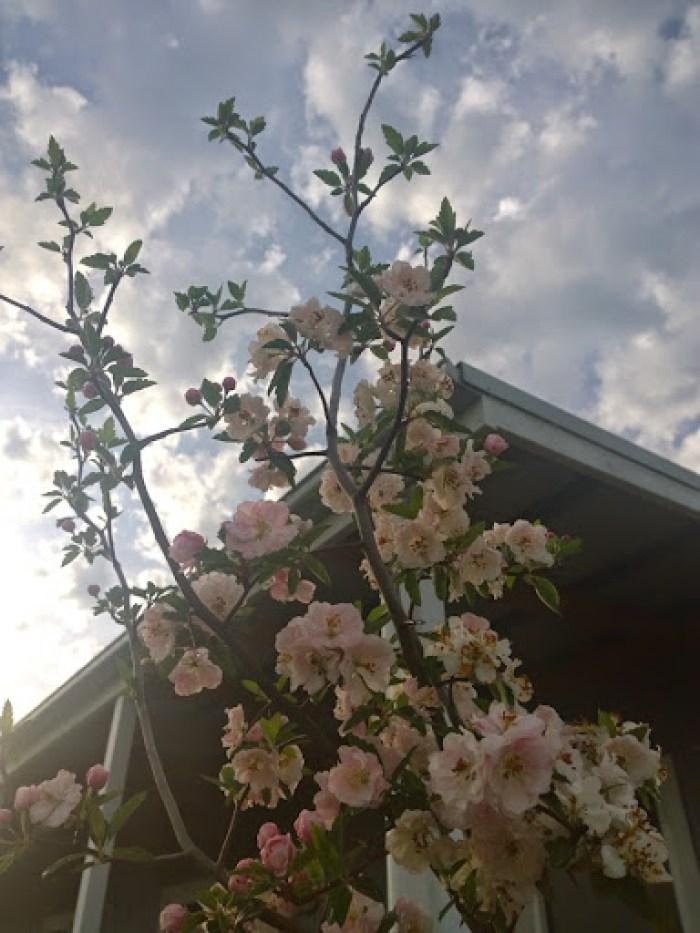 my garden oct 2014 (30)