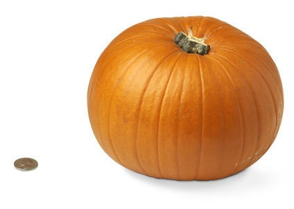 40-small-pumpkin