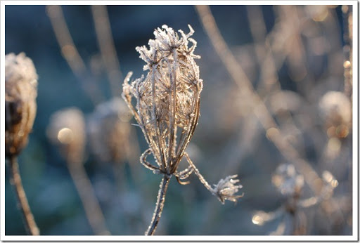 Frosty Morning (6)