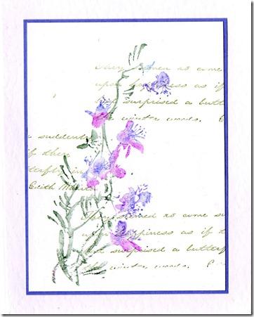 FUCHSIA 1