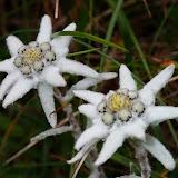 Flori de colti, admirate si fotografiate