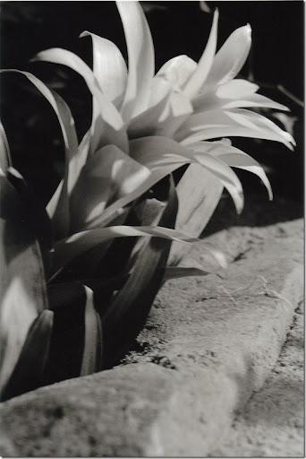 Botanical-Gardens-4-AP-56-Y-6-M-9