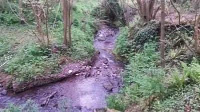The river in Coombe Vale