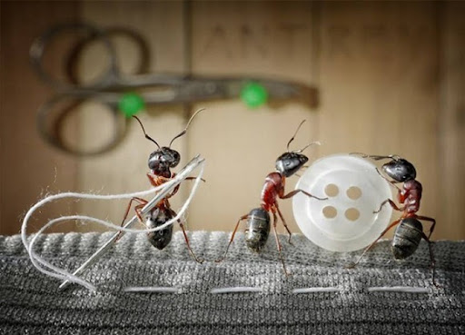 Life-of-Ants-Andrey-Pavlov-30