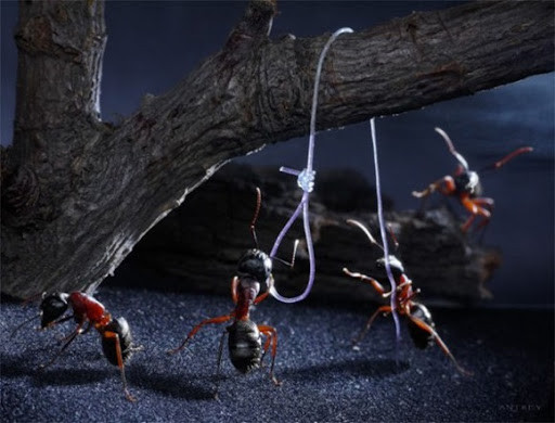Life-of-Ants-Andrey-Pavlov-04