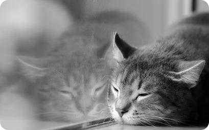 sleeping by a window