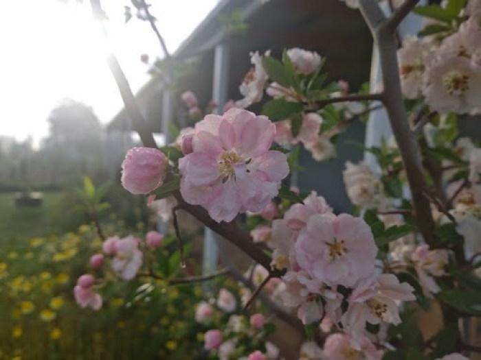 my garden oct 2014 (28)