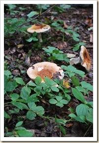 fungus 10