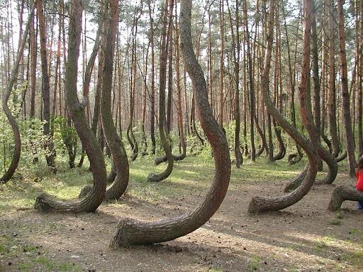 storto-foresta-6