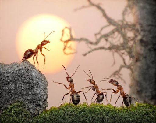 Life-of-Ants-Andrey-Pavlov-08
