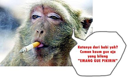 rokok dari darah babi