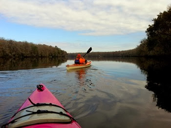 silky water as we paddle upstream on the Suwannee River