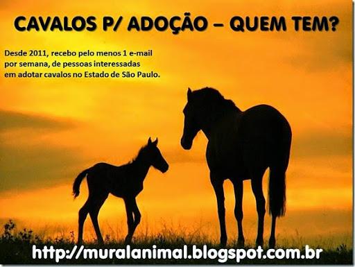 cavalos-adocao