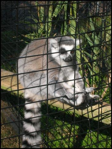 Richmond Metro Zoo 3rd Grade MES Field Trip 173