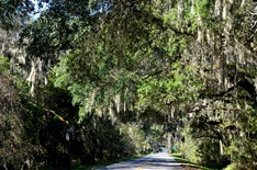 On the way to Micanopy