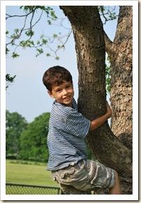 ed in pecan tree