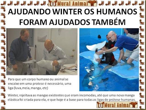 winter_golfinho (4)