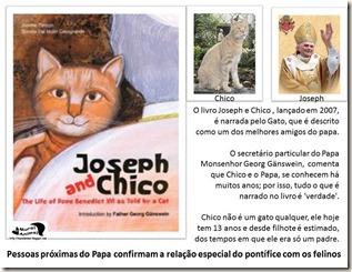 papa_ama_gatos (8)