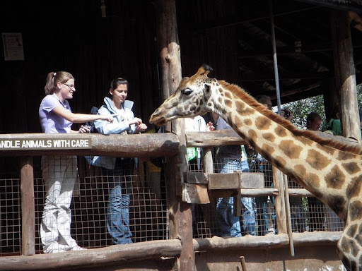 giraffa-maniero-13