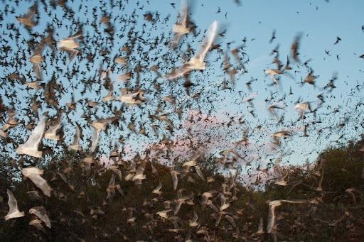 Bracken Bat Cave World S Largest Bat Colony Amusing Planet