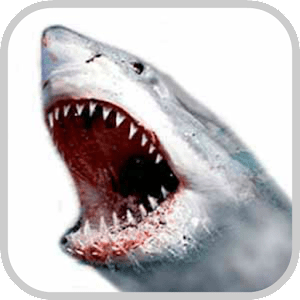 How To Draw Shark Animal