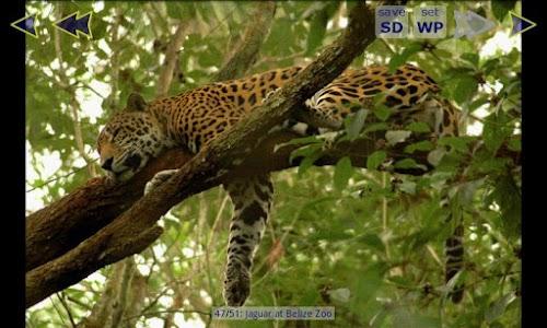 Jaguar Wallpaper Gallery screenshot 0