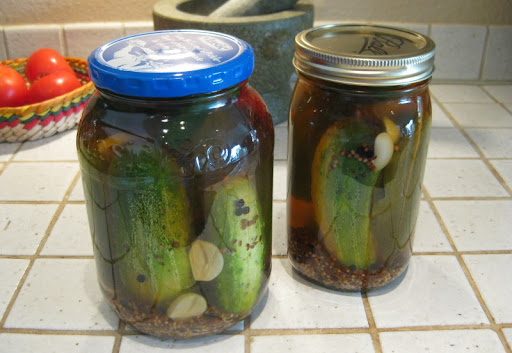 Homemade Zesty Dill Pickles