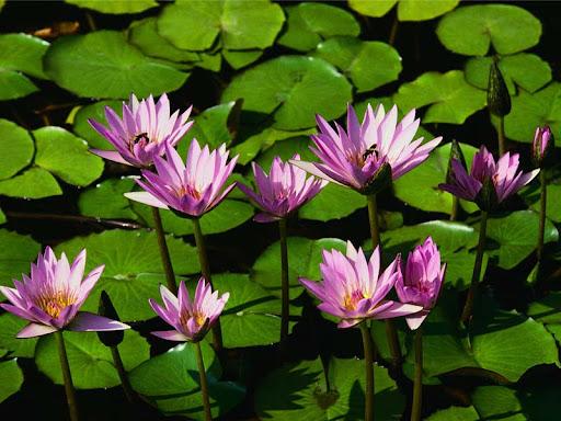 liu yi fei nude photos