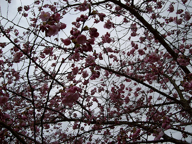 Trees in bloom