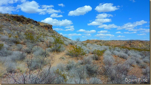 Big Bend Ranch State park_047