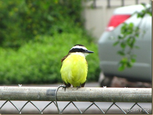 Birding valley nature center_035