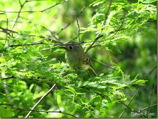 big sit birds_036