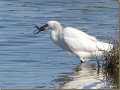 Nummy Island, NJ_20090520_066