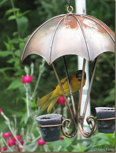 birds at feeder_20090623_002