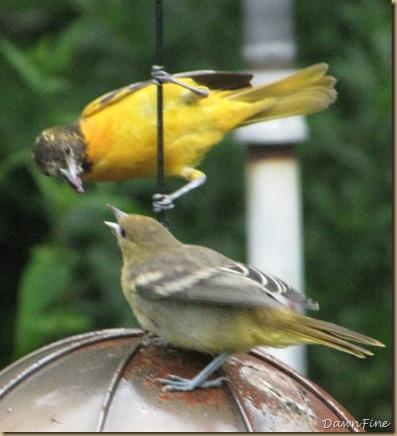 birds at feeder_20090623_007