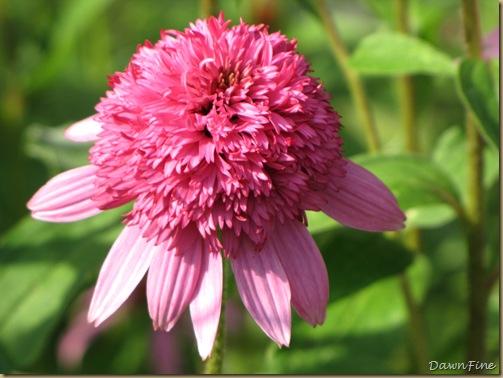 loris garden_20090718_003