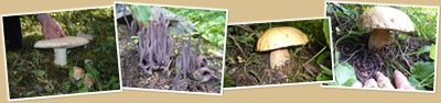View montana mushroom