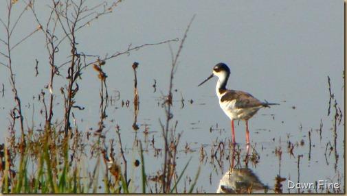 Consumnes birding_099