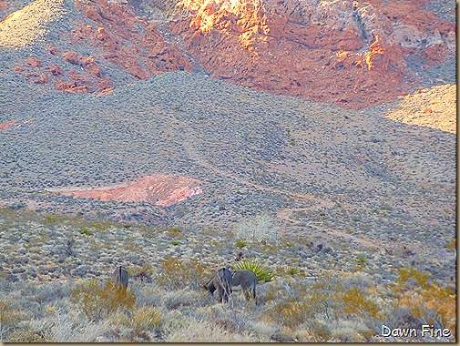 calico basin walk _066