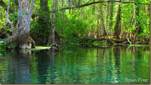 Silver Springs State Park_232