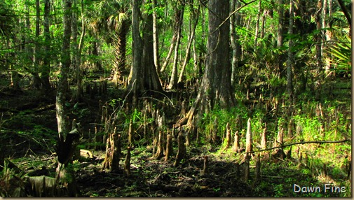 Silver Springs State Park_263
