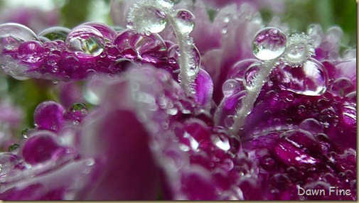 Water droplets and flowers_036