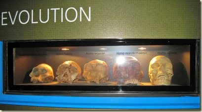 Evolution of man Cradle of Humankind Museum South Africa