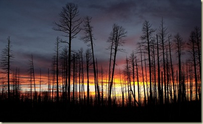 Sunset through 2006 Warm fire trees Hwy 67 S Kaibab National Forest Arizona