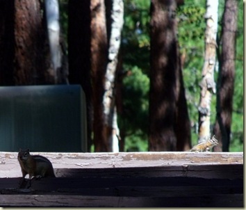 02 Ground squirrel & Chipmunk on bench backs at campground amphitheater NR GRCA NP AZ (1024x872)