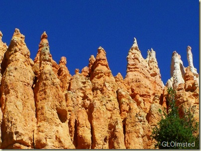 Hoodoo view from bottom of Navajo Loop trail Bryce Canyon National Park Utah
