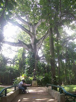 Ceiba del Parque Museo La Venta, el busto es Pellicer